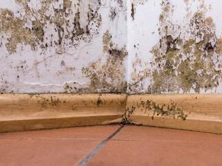 Does Your Insurance Cover Dry And Wet Rot?