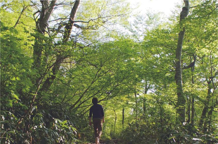 [ブナの森ウォーク] ブナの森ウォーク