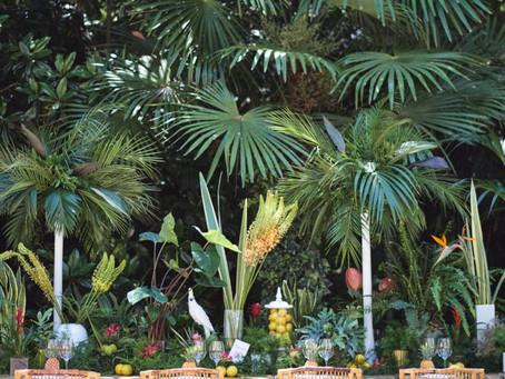 Tropical Minimal: nuestra colección Costa Rica
