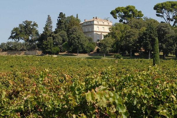chateau-la-nerthe-vineyard-chateauneuf-d