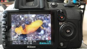 Crash (splash) course in wildlife photography