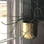 Gold hanging planters have finally arrived at the shop after MONTHS on back order.jpg