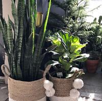 Baskets+Plants+sunshine=All the feels ❤️🌿❤️_._._._._._.jpg