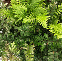 Absolutely love working with these baby ferns, they take me back to the best pieces of my childhood, growing up wildly roaming the forests o