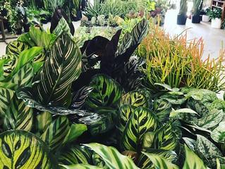 House Plant 101