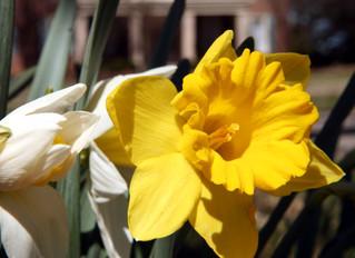 Spring is here at Charred Oaks Inn Lexington Kentucky!