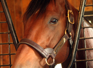 CHARRED OAKS INN SENDS BIRTHDAY WISHES TO OUR FAMOUS NEIGHBOR - AMERICAN PHAROAH!