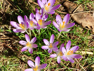 SPRING IS COMING!  SPRING IS COMING!