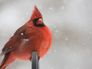 PROTECT OUR BIRDS - JOIN THE CHRISTMAS BIRD COUNT ...