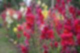 nature-3609051_1280.jpg