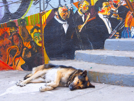 Dog on street chile.jpg
