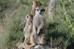Meerkat Luxury Safari Botswana
