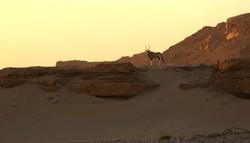 Oryx at Hoanib