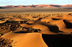 Desert early morning