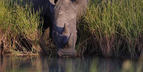 Rhino Luxury Safari Africa.jpg