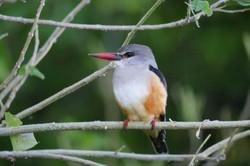 Tiny bird Namibia