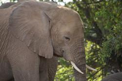 Soulful elephant