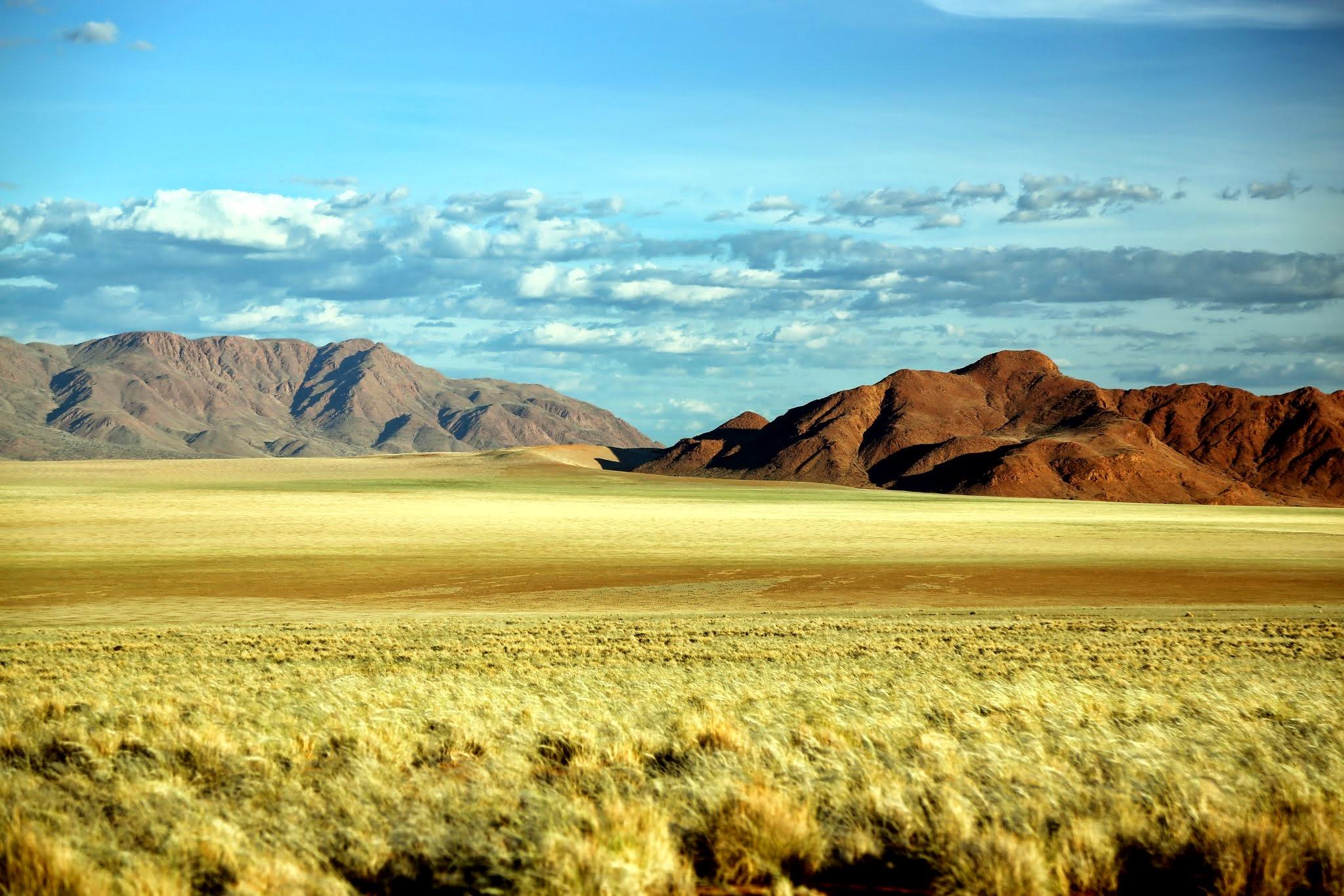 Green grass in Desert