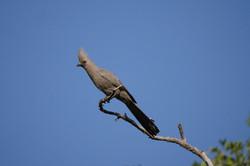 Birds Etosha