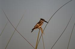 Bird at Okavango