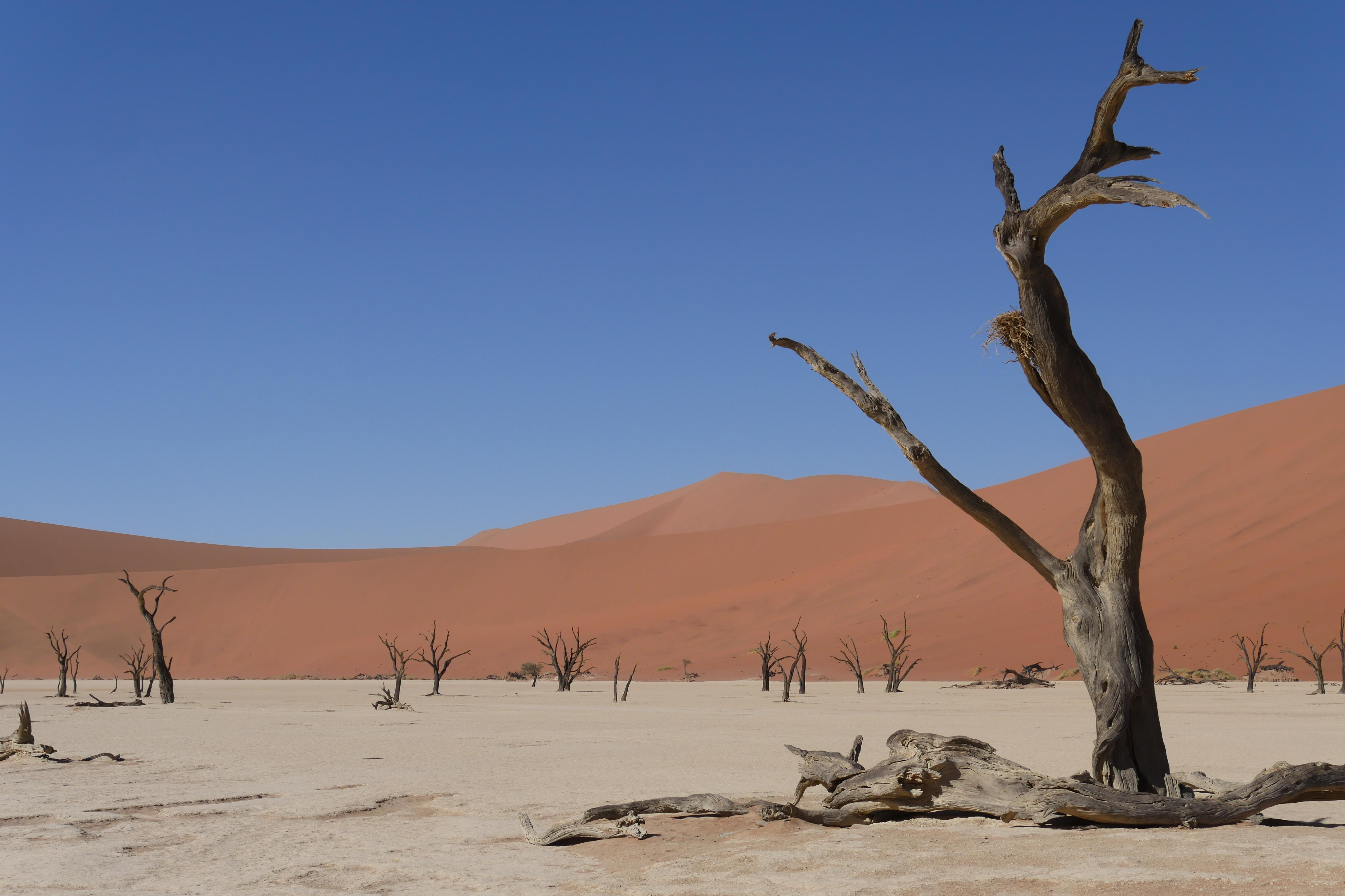 Deavlei Sossusvlei Namibia