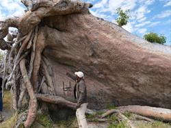 Livingstone Baobab tree