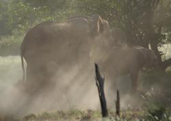 Elephant Grace Rays