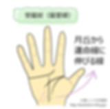 手相_寵愛線j.jpg