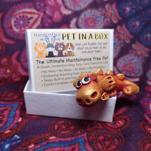 Dragon Pet in a Box
