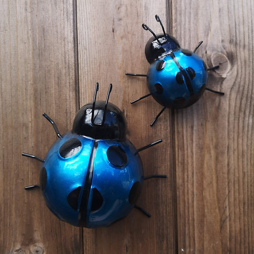 Blue Metal Ladybirds