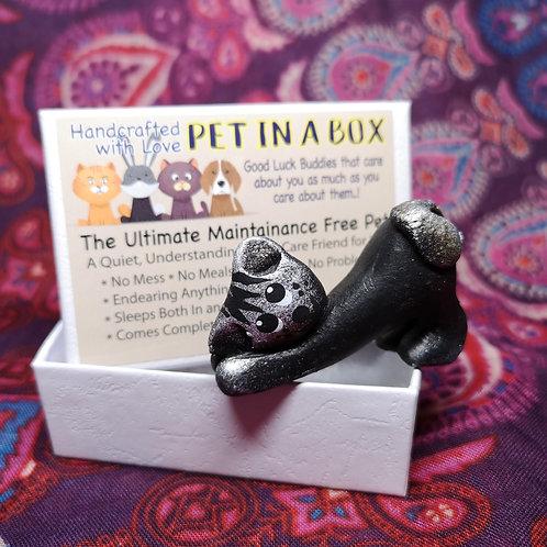 Black Cat Pet in a Box