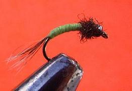 green beadhead caddis pupa