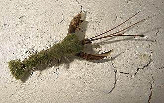 Clauser crawfish