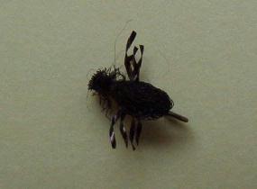 Polyarn Beetle
