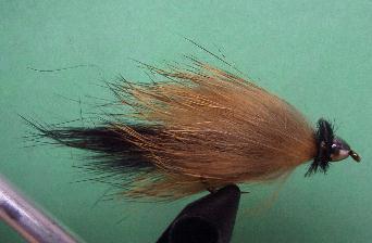 Conehead Rabbit Leech