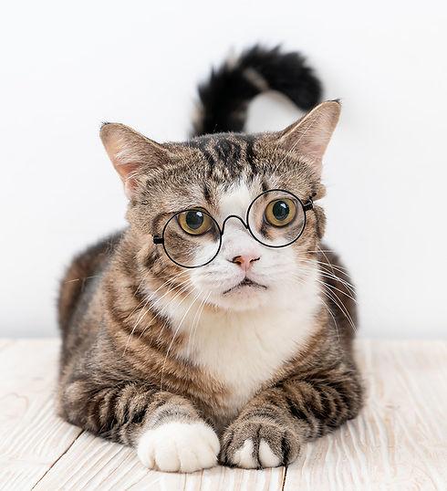 cute-grey-cat-with-glasses.jpg