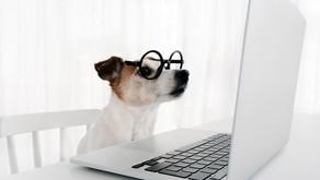 הכנה לחזרה לשגרת הלימודים והעבודה חשובה גם עבור הכלב