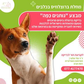 מחלת ברוצלוזיס בכלבים