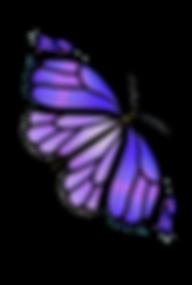 mariposa-ciclo-4.png
