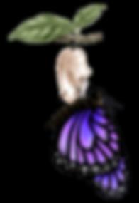 mariposa-ciclo-3.png