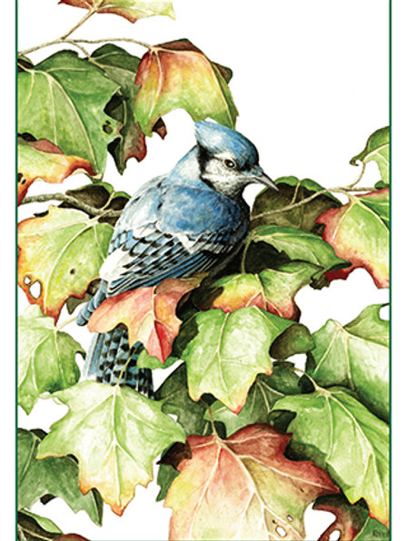 Autumn Maple Bluejay