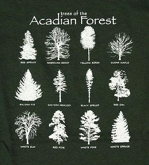 TreesOfTheAcadianForest.JPG