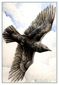 crowflight.jpg