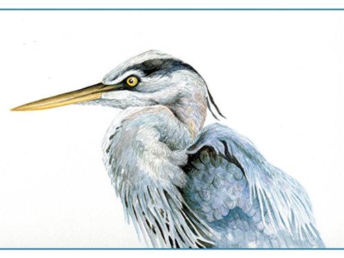 Great-blue Heron