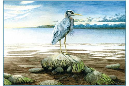 Morning Tide Heron