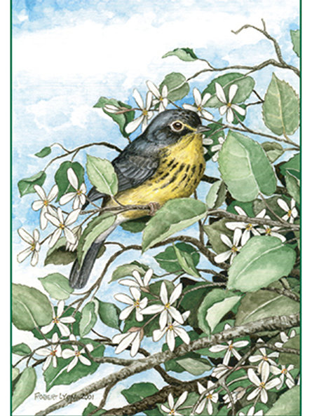 Canada Warbler & Serviceberry