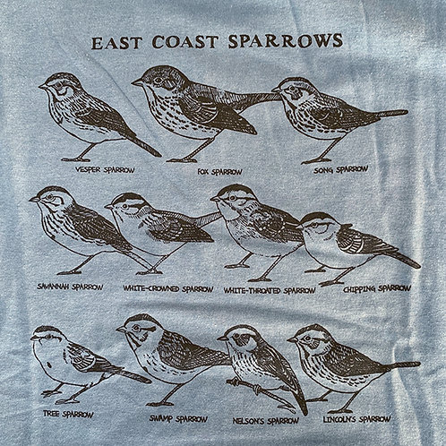 East Coast Sparrows