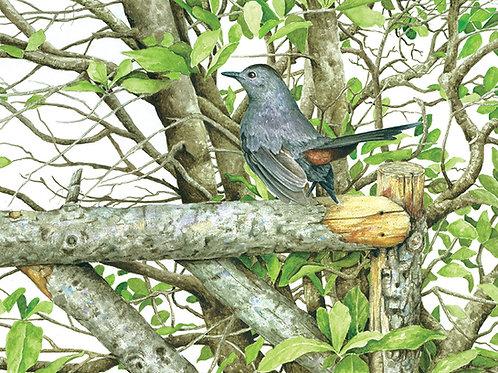 Grey Catbird & Magnolia