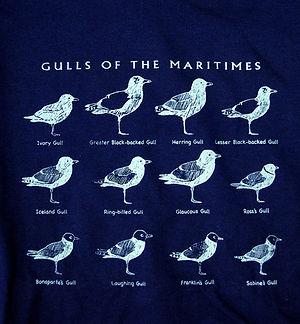 GullsOfTheMaritimes.JPG
