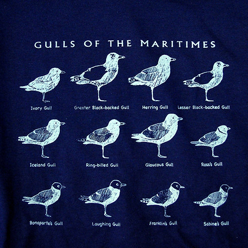Gulls of the Maritimes